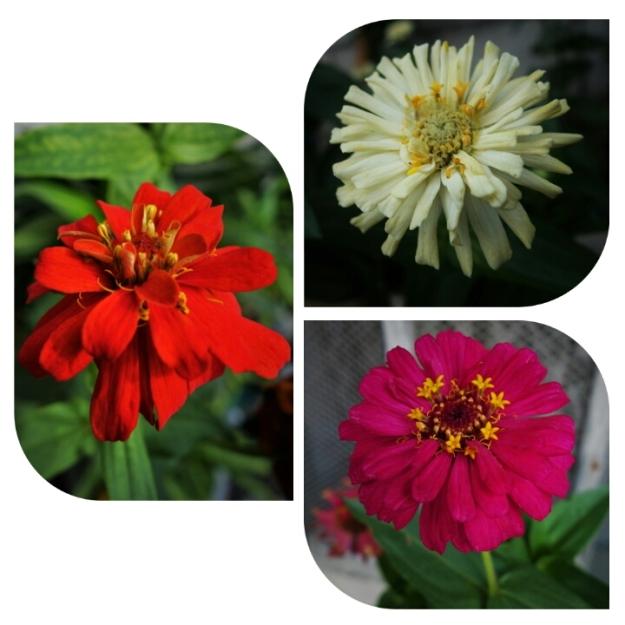 Samboan Flora 01