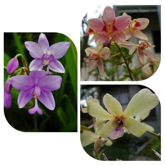 Samboan Flora 02
