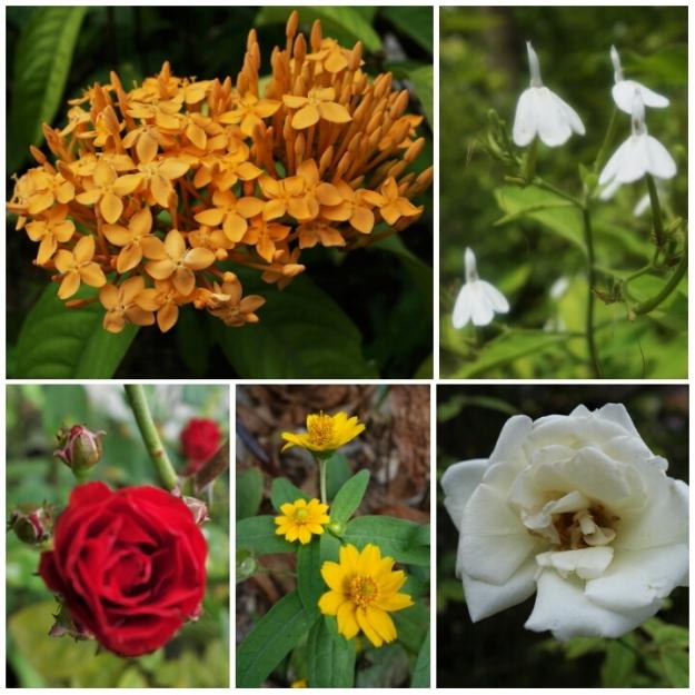 Samboan Flora 03