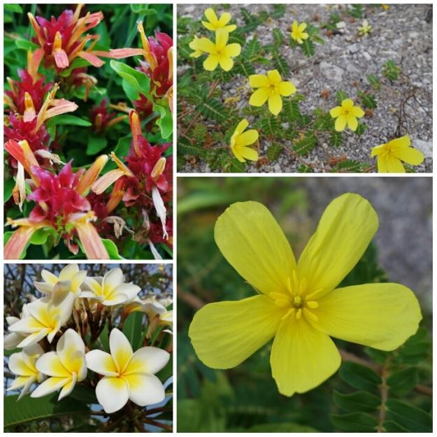 Samboan Flora 05